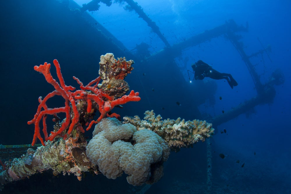 Arredife de coral en Aqaba