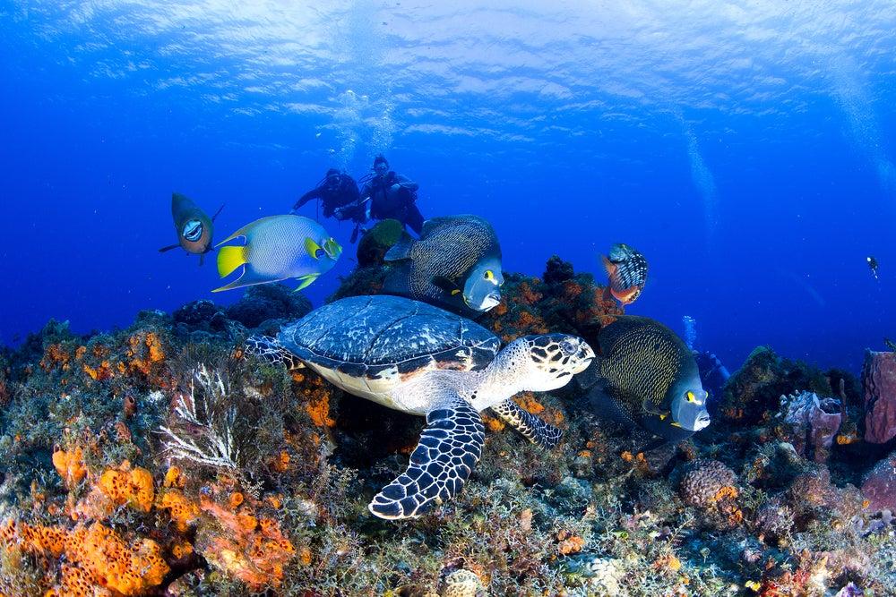 Arrecife de Cozumel