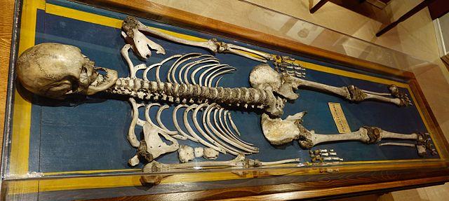 Esqueleto en el Museo Nacional de Antropología