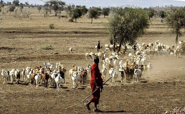 Tribu masai en África