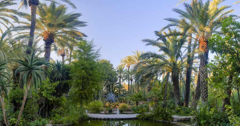 Cómo llegar al Palmeral de Elche, un oasis en la ciudad
