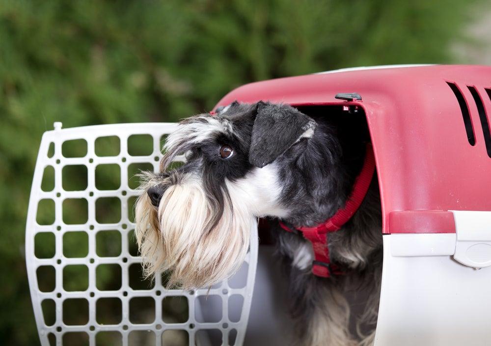 Perro en un transportín