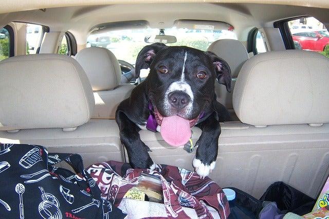 Perro en un coche