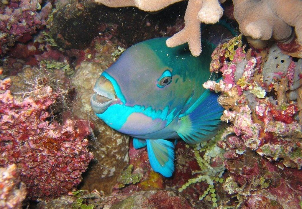 Pez en la Gran Barrera de Coral