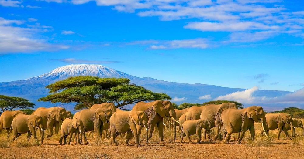 Monte Kilimajaro