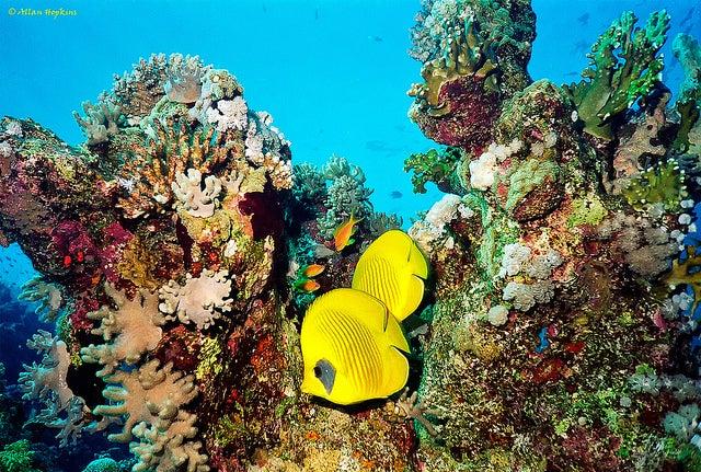 Sharm El Sheik en Egipto