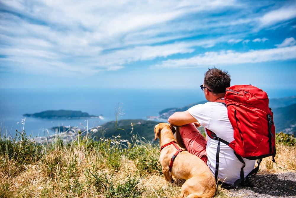 ¿Y si este año te animas a viajar con tu mascota?
