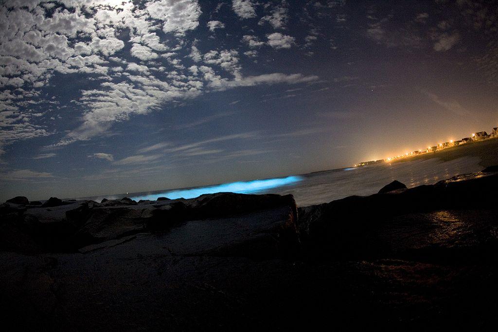 Bioluminiscencia en la playa