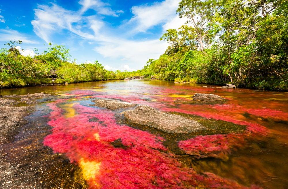La magia de Caño Cristales, el río más hermoso del mundo