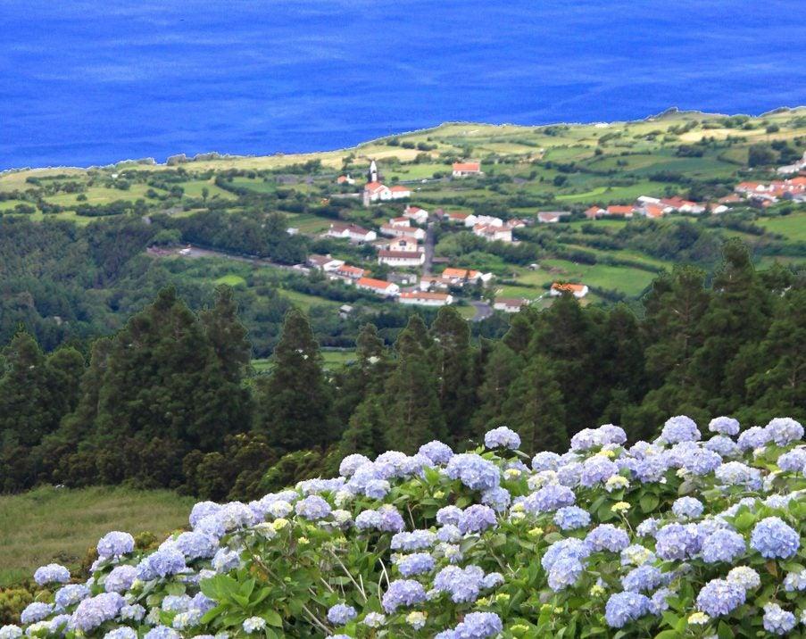 Flores en Faial en Azores