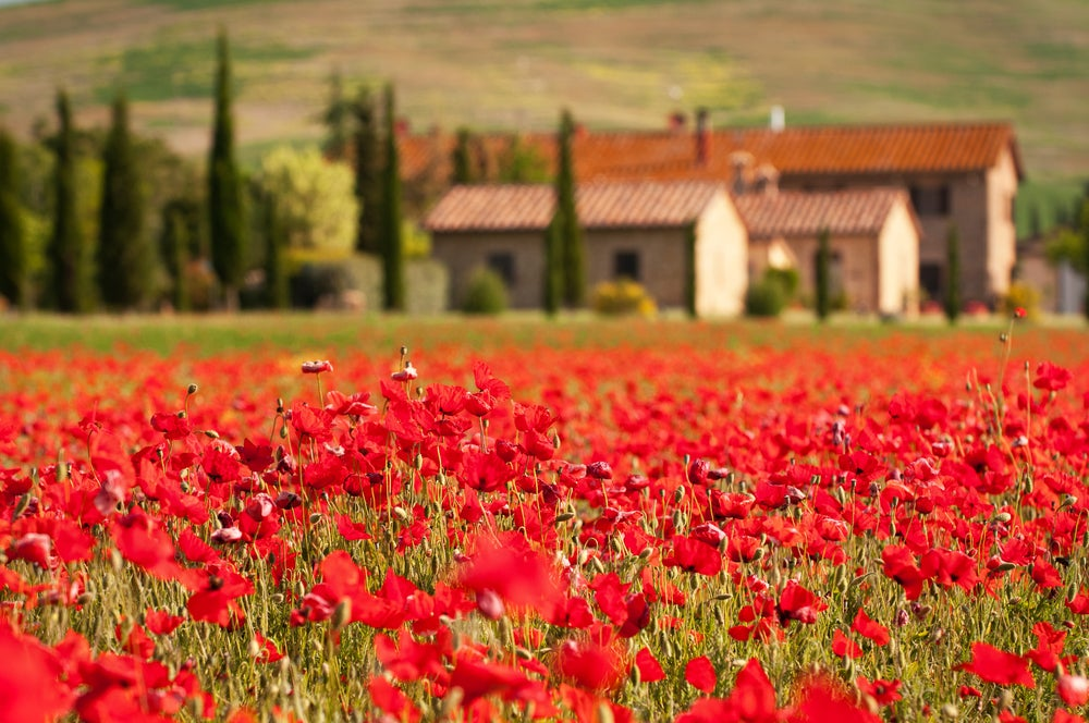 Amapolas en Toscana, en un recorrido por Europa a través de sus flores