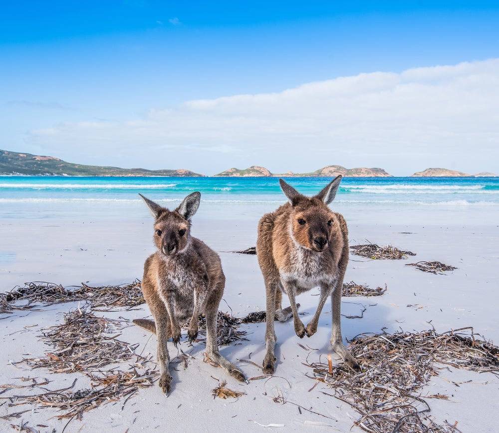 Kangaroo Island en Australia