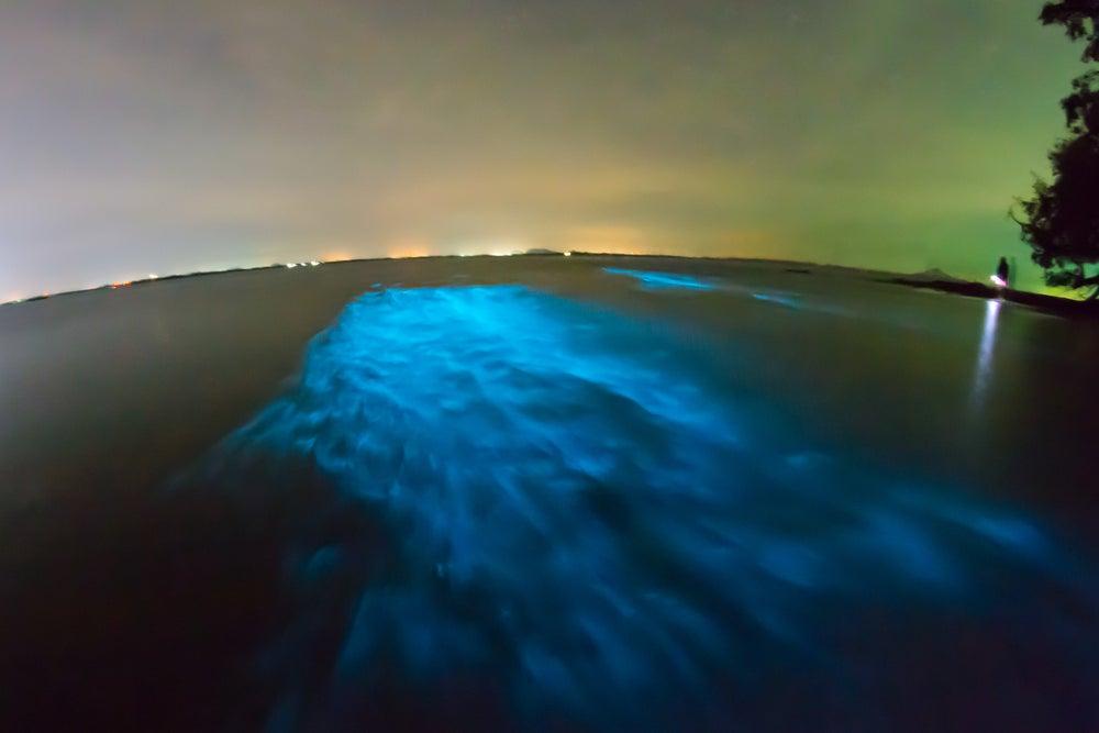 Mar de estrellas en Maldivas