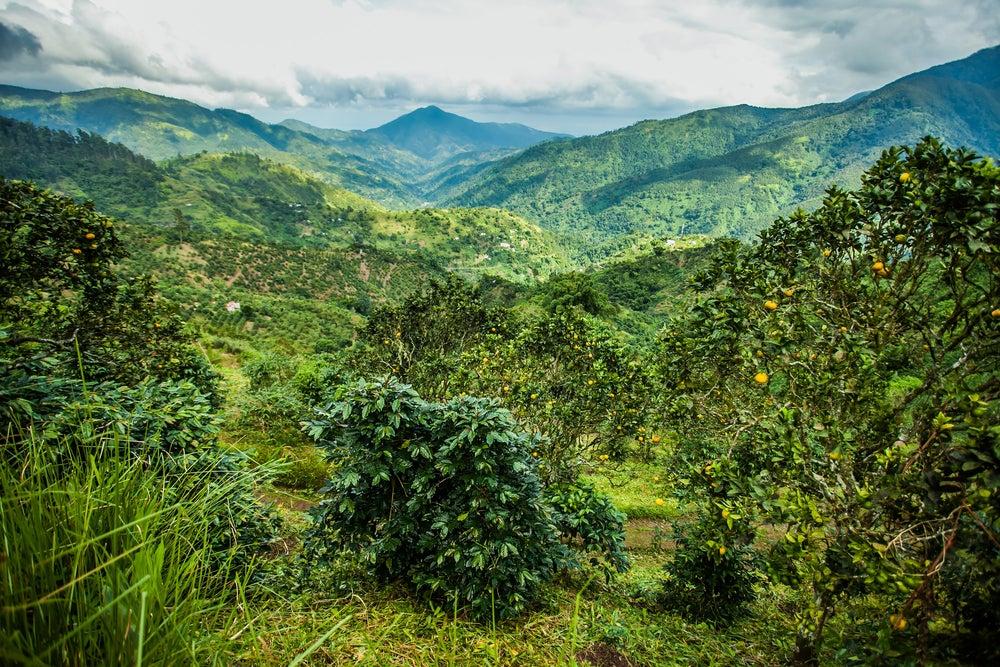 Montañas Azules en Jamaica
