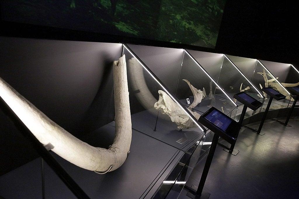 Fósiles en el Museo de San Isidro deMadrid