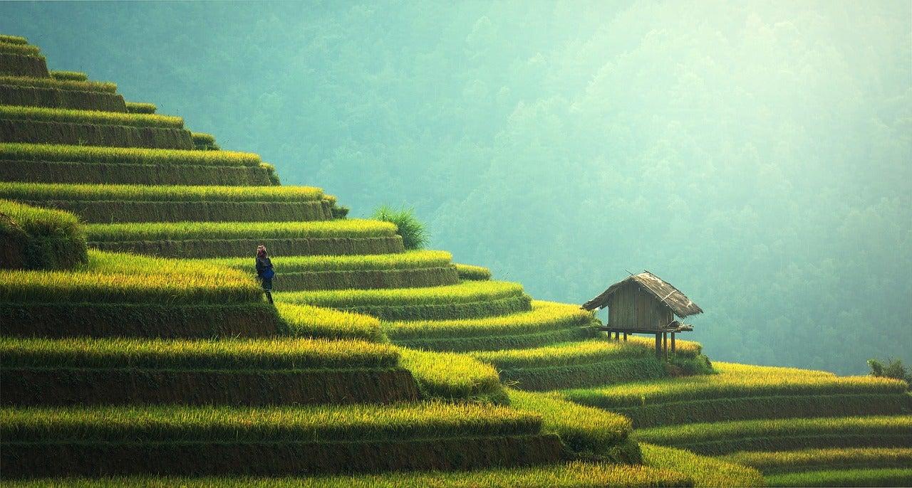 Plantación de arroz en Bali