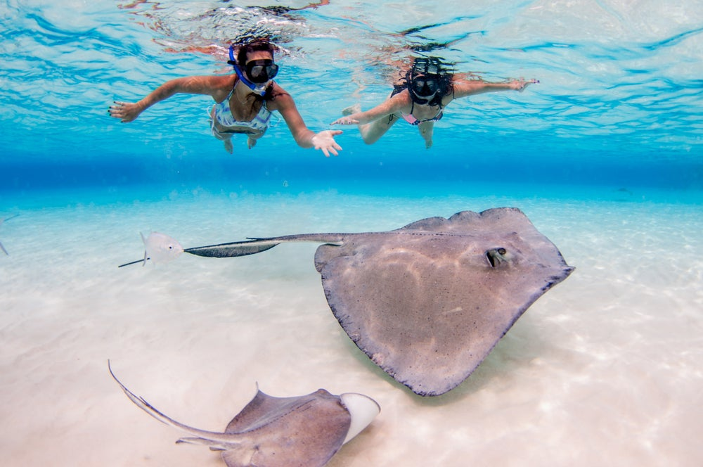 Mantas raya en Stingray City en islas Caimán