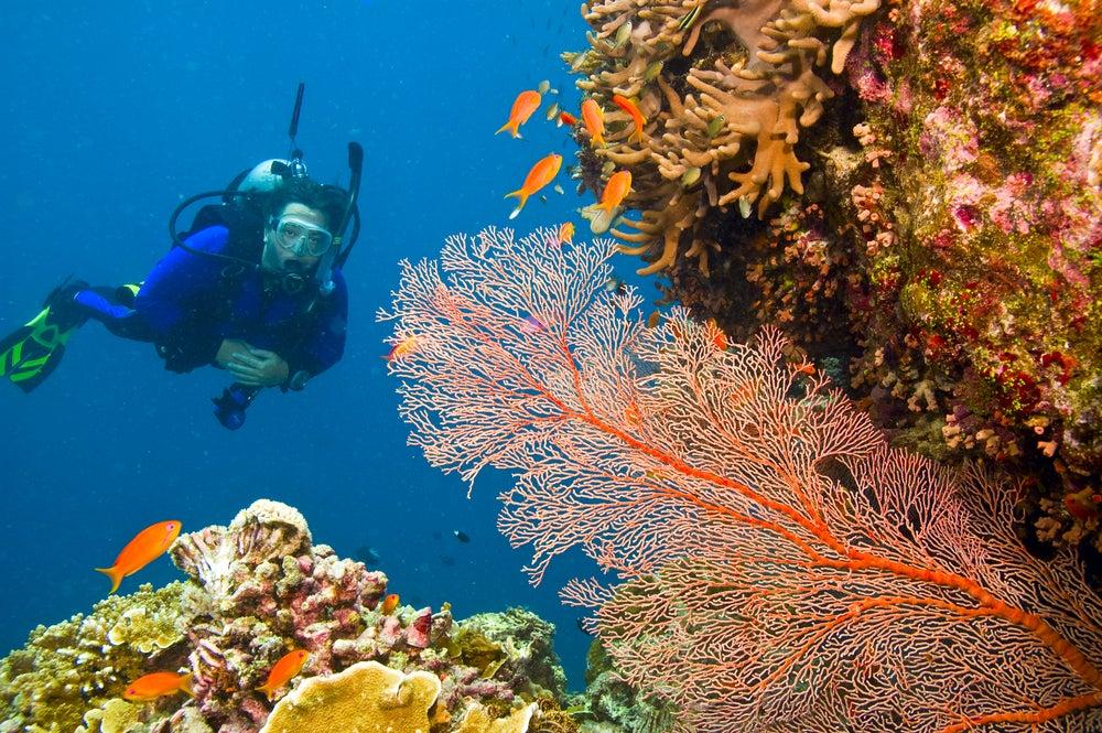 Fondo marino de la Gran Barrera