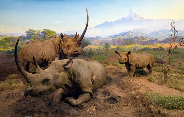 Animales africanos en el Museum of Natural History