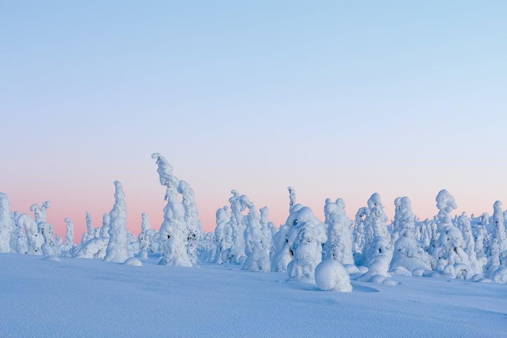 Descubre los fascinantes centinelas del Ártico en Laponia
