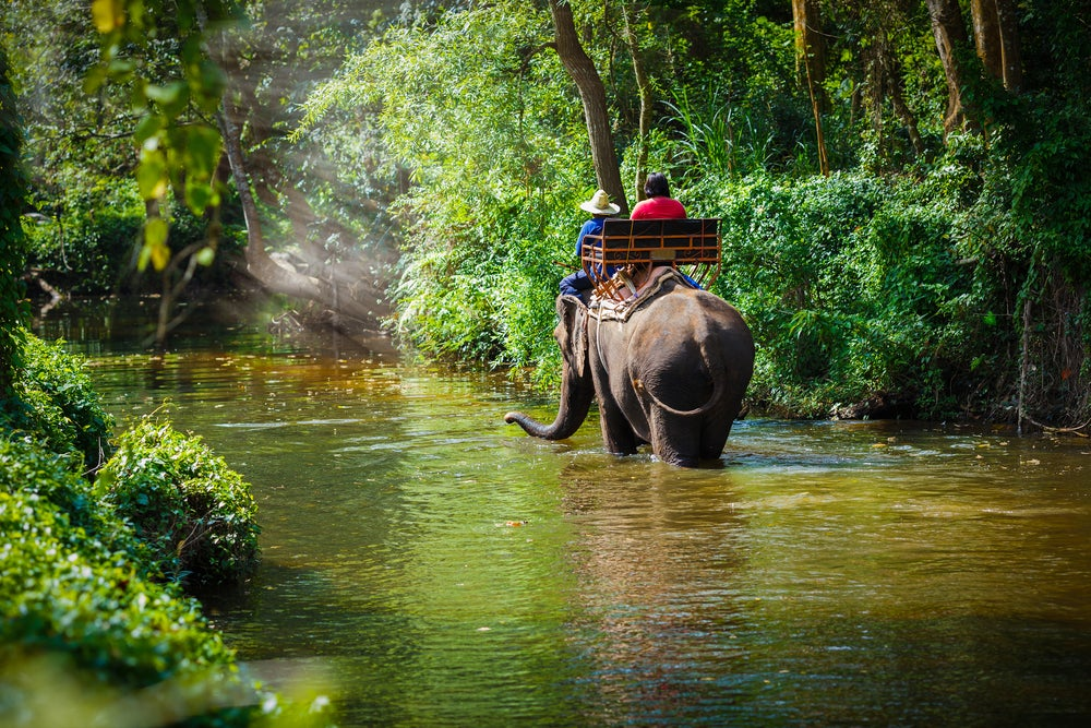 Selva en Chiang Mai