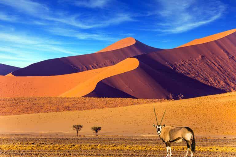 Descubriendo Namibia, un país fascinante