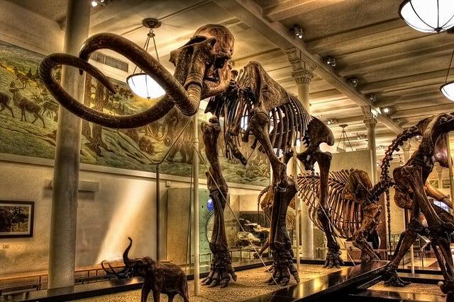Colección de animales en el Museum of Natural History de Nueva York