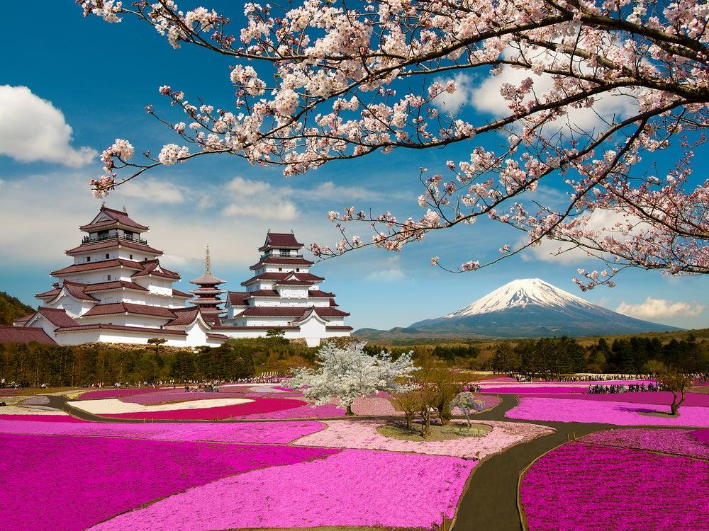 Fuji Shibazakura, uno de los campos de flores más bonitos