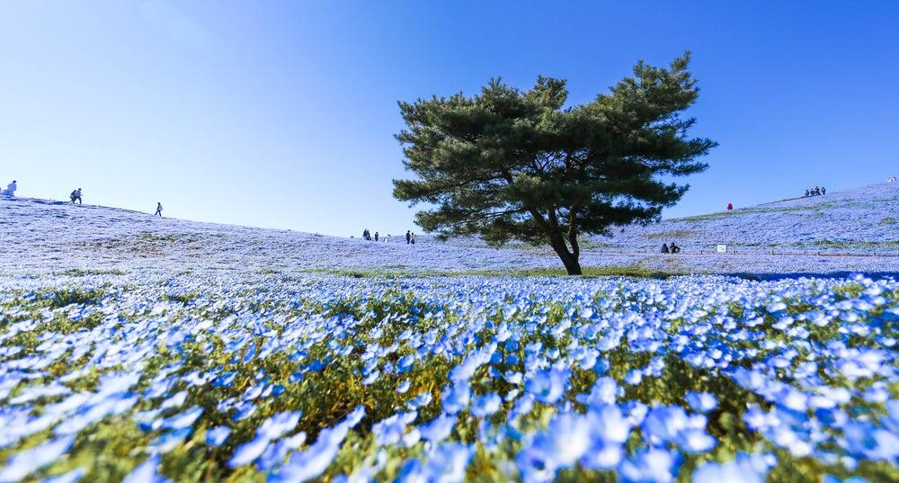 Parque Hitachi en Japón