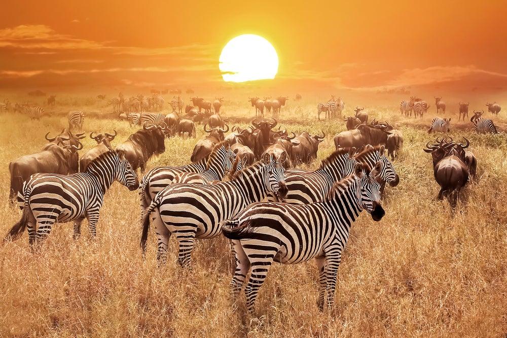 Lugares de África en los que vivir momentos únicos