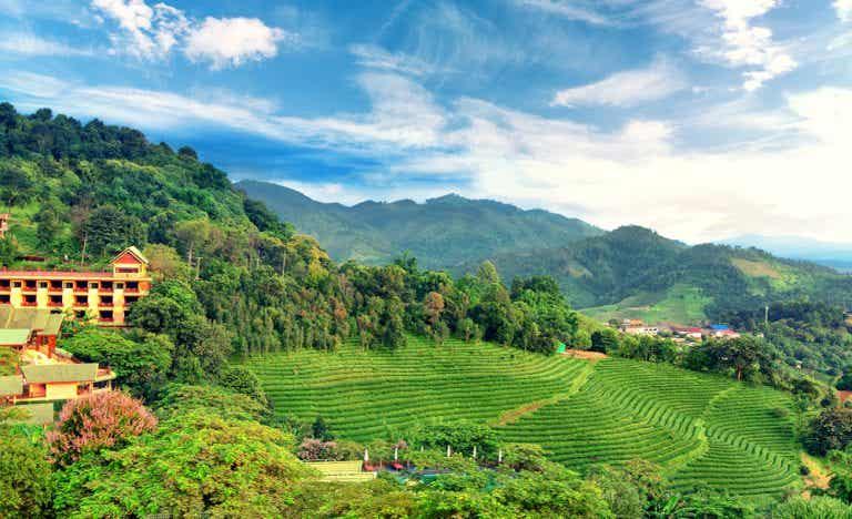 Mae Salong, una sorpresa al norte de Tailandia