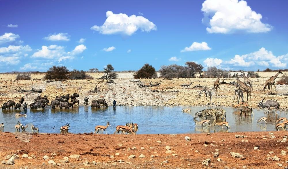 5 viajes espectaculares para conocer animales salvajes