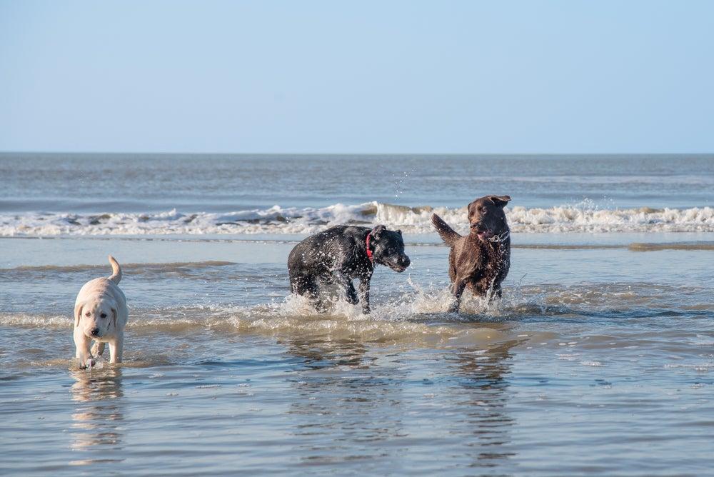 7 playas para perros que no te puedes perder
