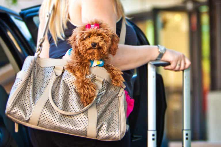 Los mejores destinos para viajar con mascotas