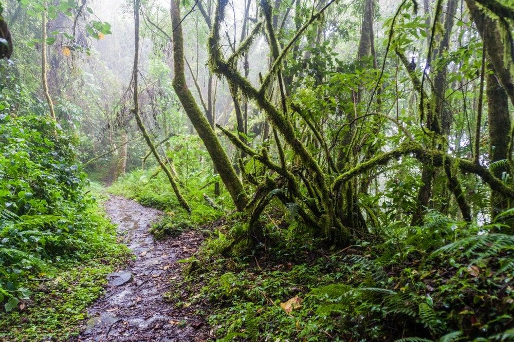 Sendero de Los Quetzales en el volcán Barú