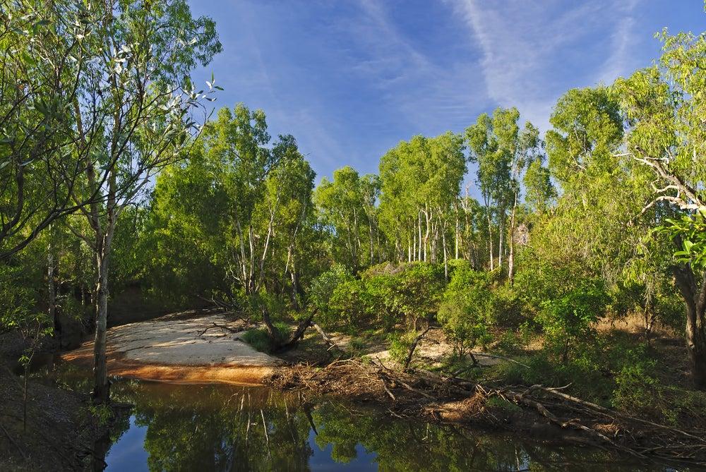 Billabong en Darwin