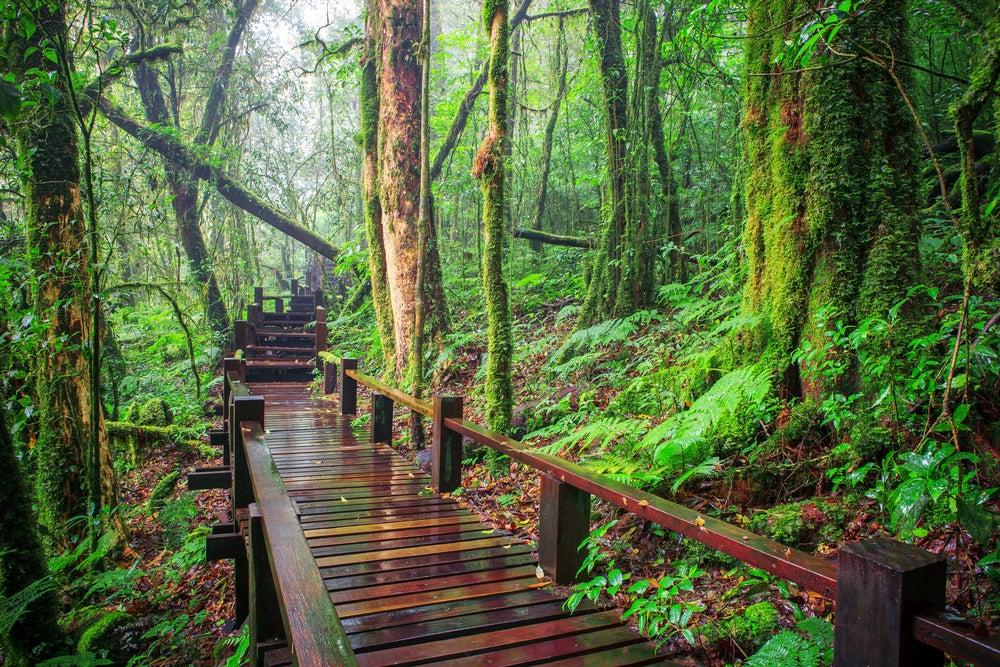 Bosque en Doi Inthanon