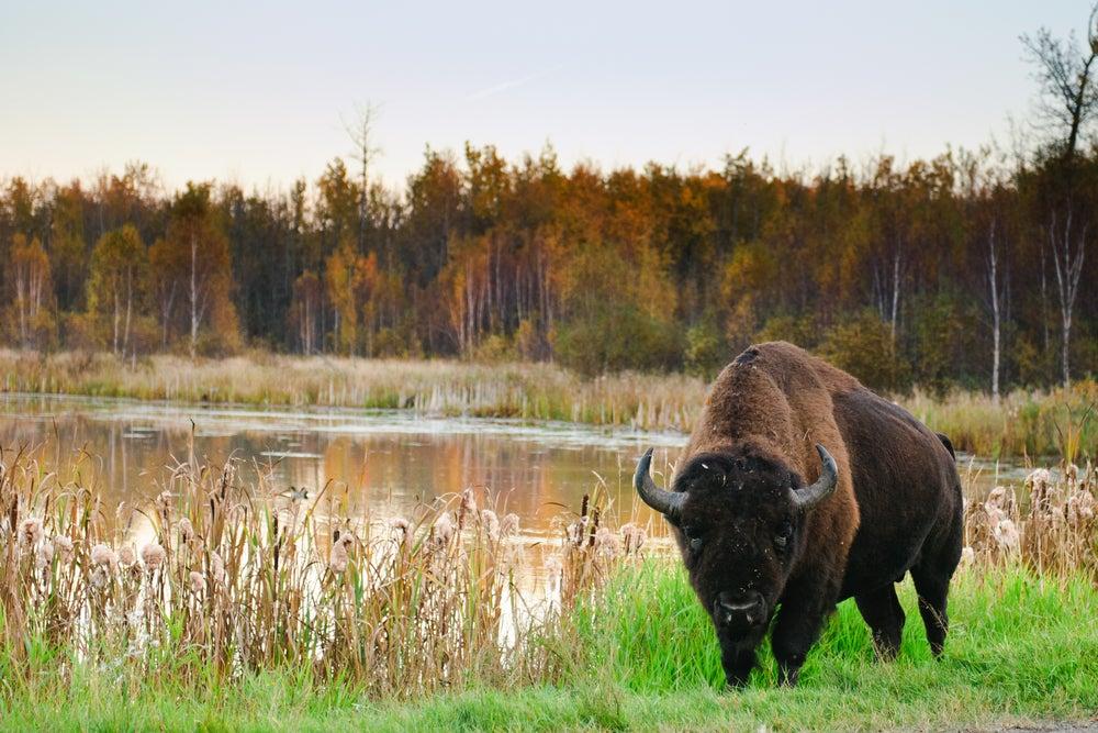 Parque Nacional Elk Island en Alberta