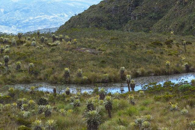 Parque Natural Iguaque