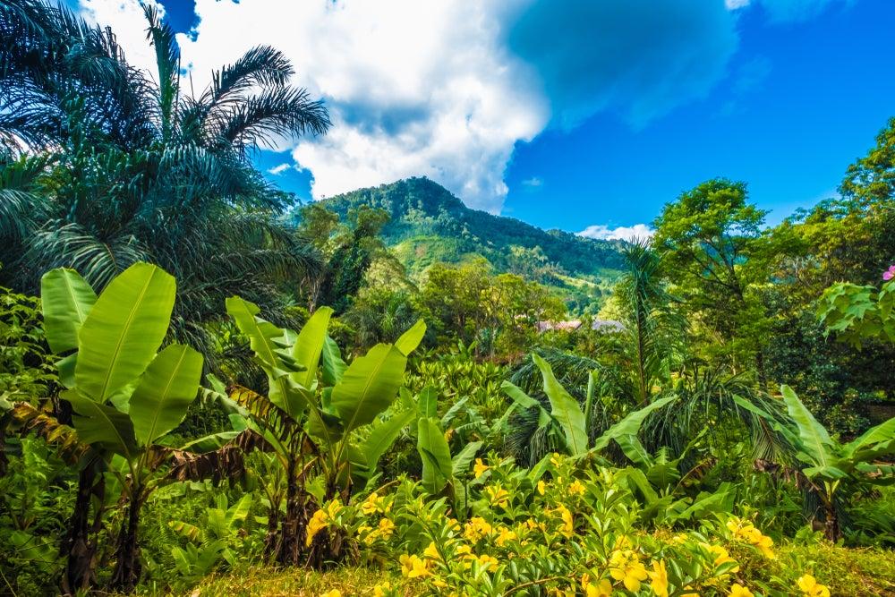 Parque Nacional de Ranomafama