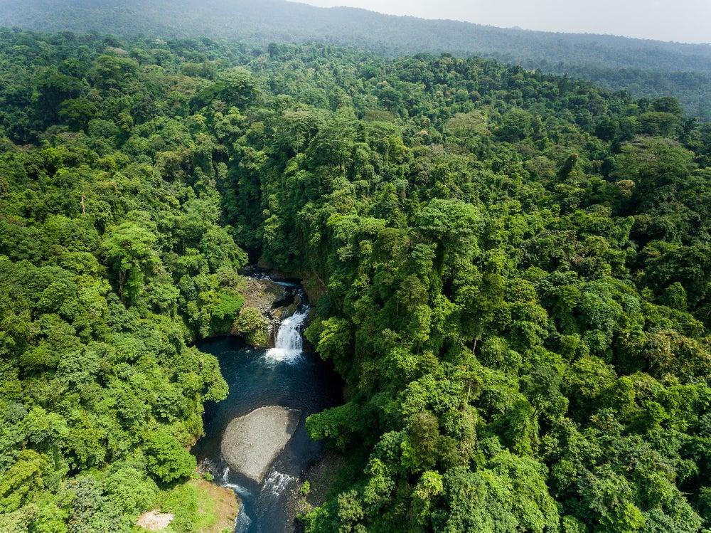 Selva en Guinea Ecuatorial