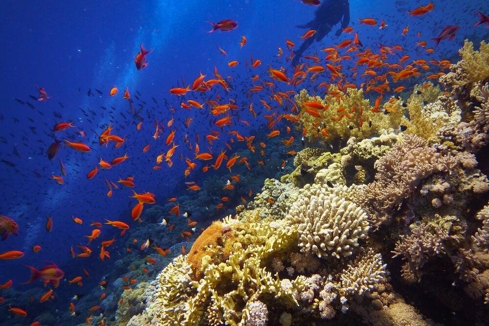 Fauna en la Gran Barrera de Coral