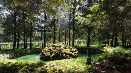 Jardín en Satartoga Springs