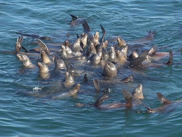 Leones marinos en Monterrey