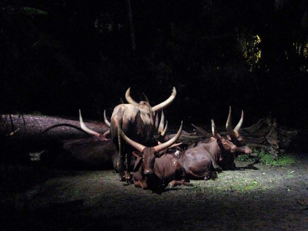 Animales en el Night Safari