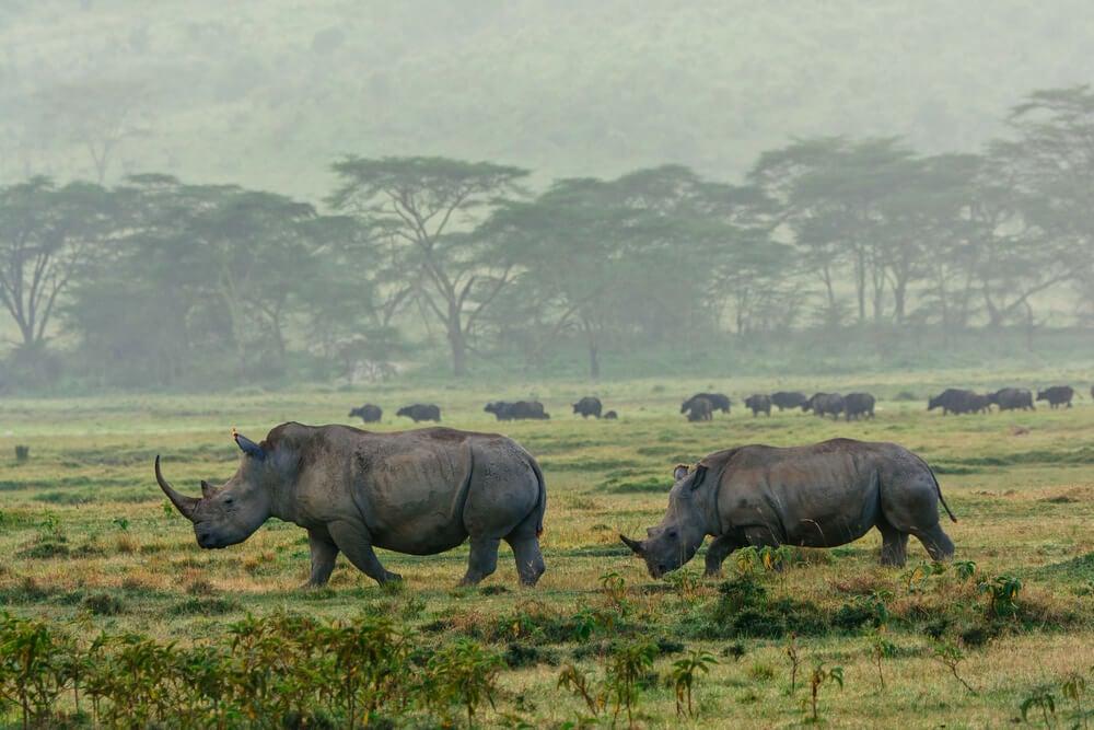 Rinocerontes en el Parque Nacional Etosha de Namibia