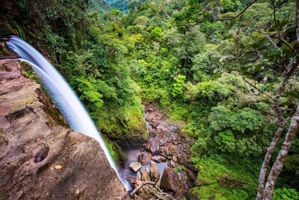Conoce la belleza de la selva amazónica de Colombia