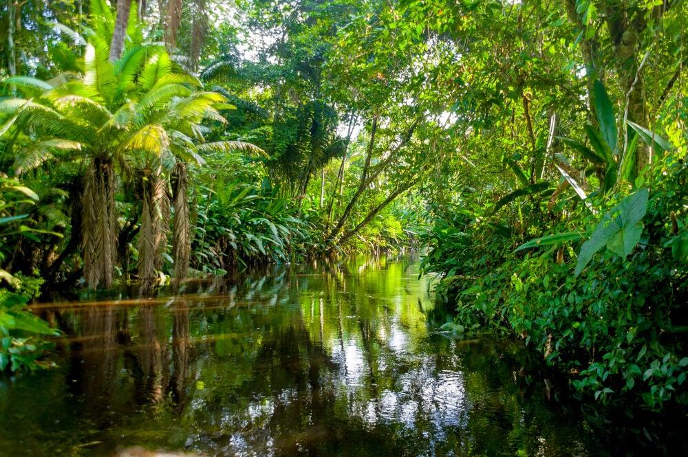 Selva en Yasuni, Ecuador