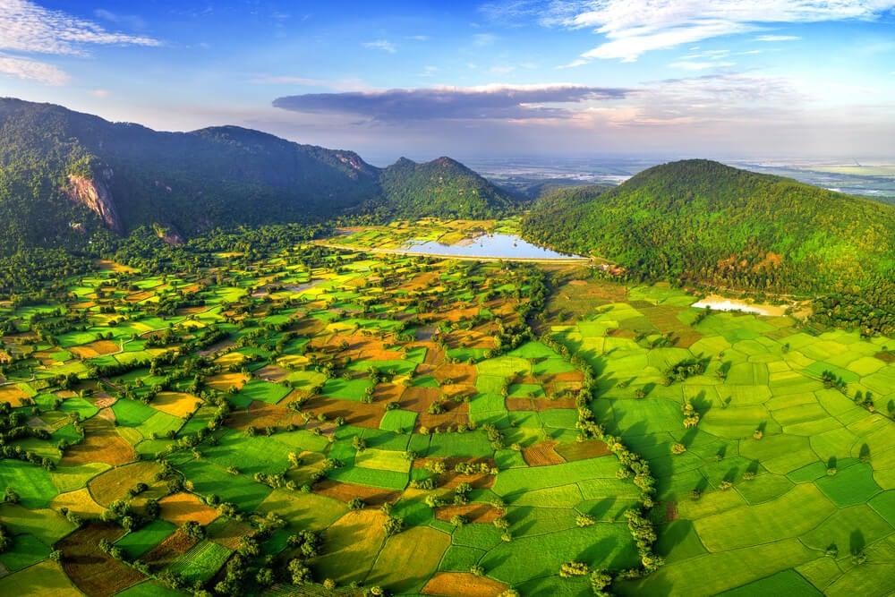 Campos de arroz en el delta del río Mekong