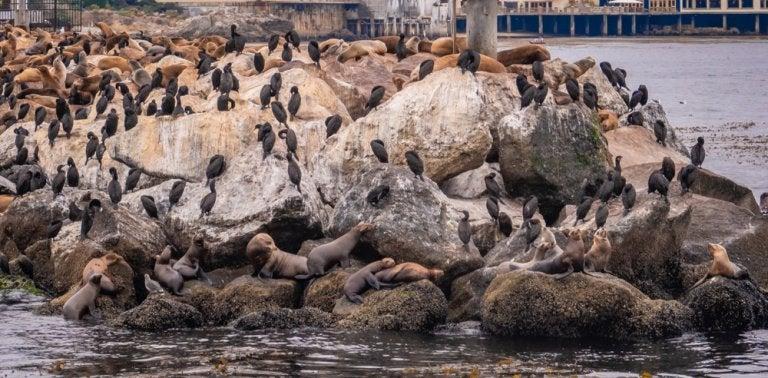 Monterrey en Estados Unidos: conoce los leones marinos